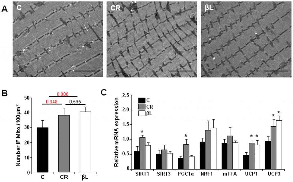 beta-lapachone mitochondria